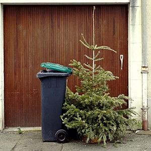 Christmas Tree At The Trash Can