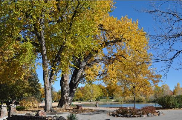 Fort Collins City Park Leaves Changing
