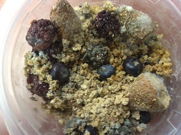 Fuzzy Fruit & Granola from K99 Fridge