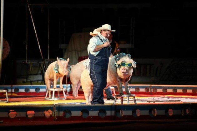 Shriner Circus Pig Act