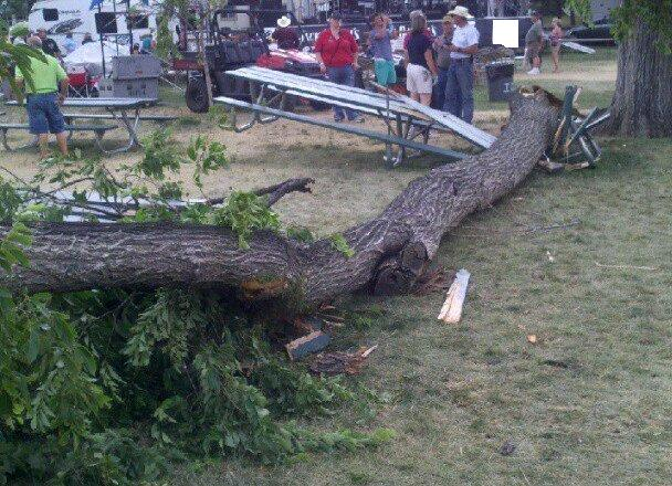 Tree that fell at the Greeley Stampede
