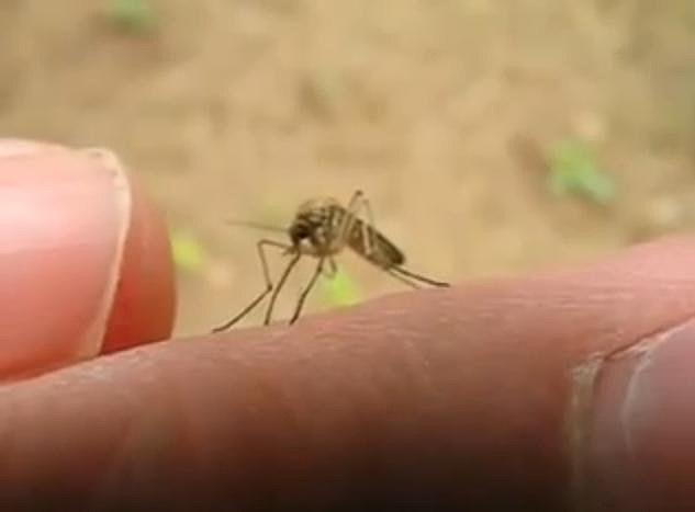 Mosquito biting finger