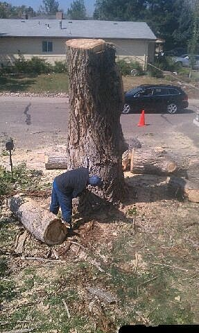 tree cut 1