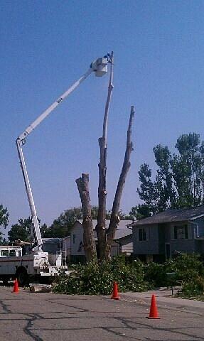 tree cut 3