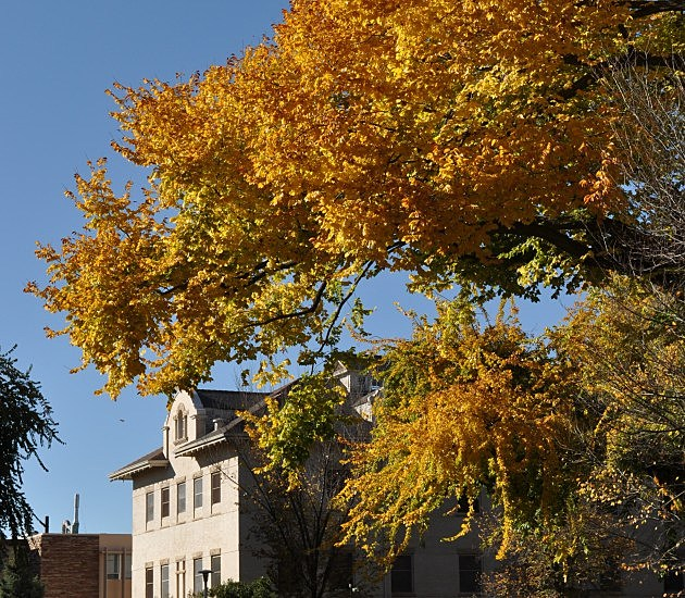 Leaves Changing CSU Oval