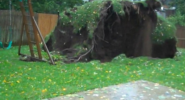 Treeuprooting