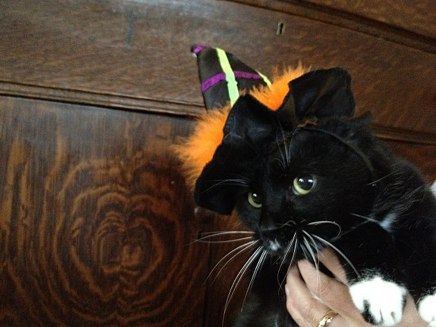 Todd's cat Morgan with witches hat