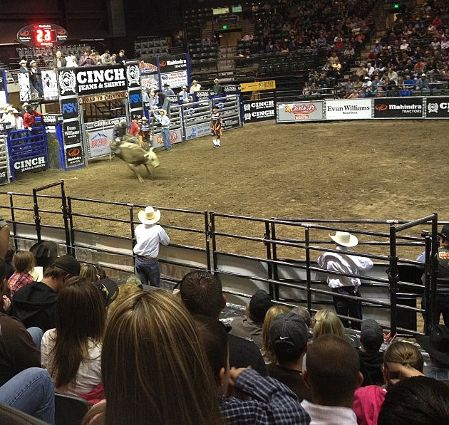 Bull Riding at the Budweiser Events Center