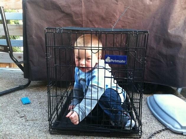Zander in cage