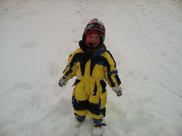 Zander in snow