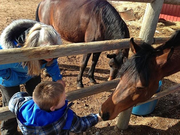 Zander and horses