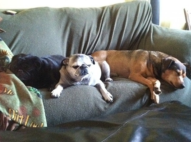 puppies sleeping on couch