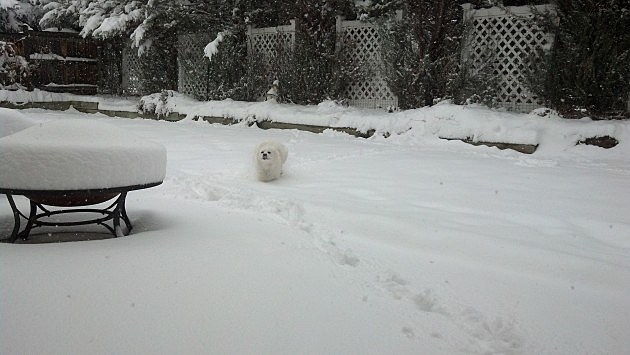 Sam on Snow Day