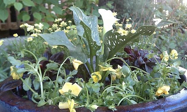 Annual Flower Pot 2012