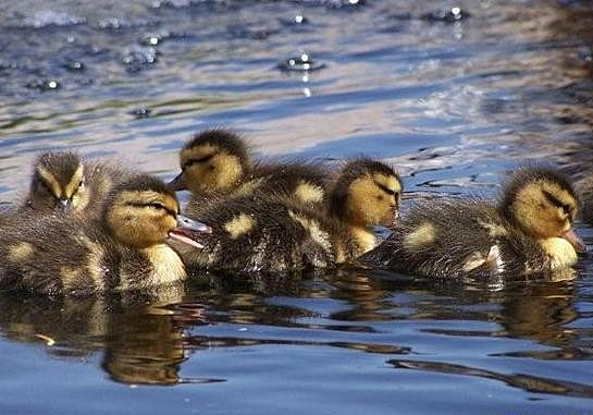 Babies Go For a Swim