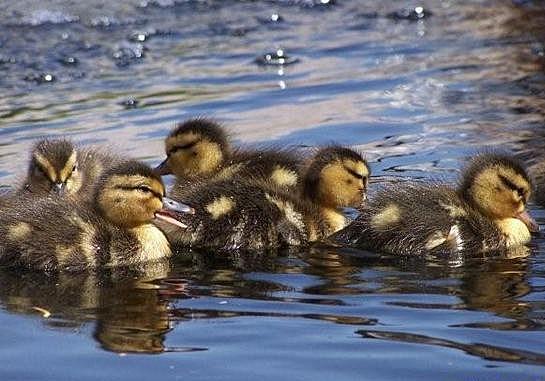Babies Go For a Swim