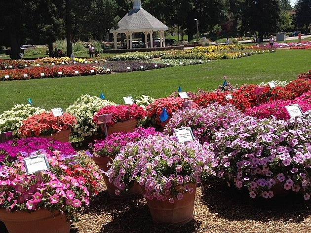 Annual Colorado State University Flower Trial Gardens