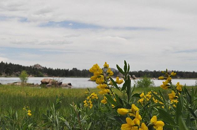 Yellow Flowers at Dowdy Lake