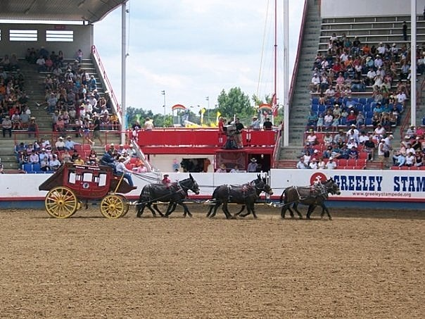 Todd Harding riding in stage coach at Greeley Stampede