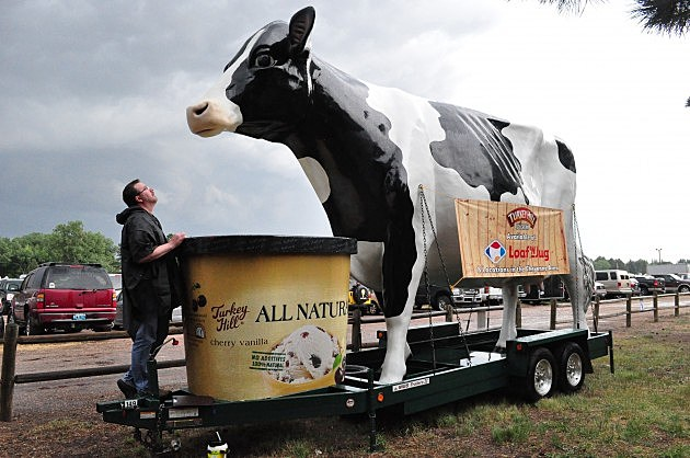 Todd Harding Looks Up at Giant Cow at Cheyenne Frontier Days