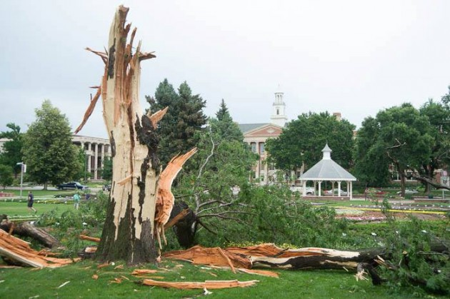 CSU Flower Trial Garden Tree Struck by Lightning
