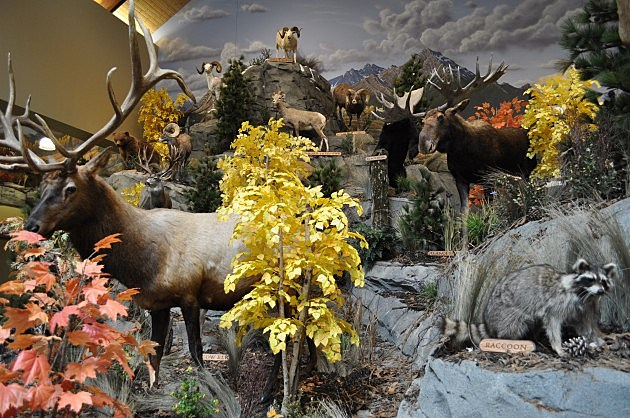 Cabela's Animals at new store in Thornton, CO