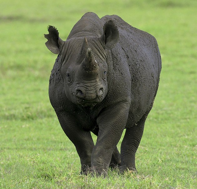 A Woman Was Injured While Feeding A Rhino At The Denver Zoo