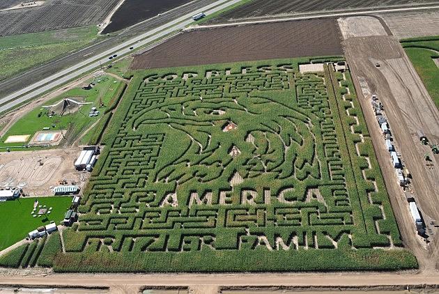 Frizler's Acres Corn Maize 2013