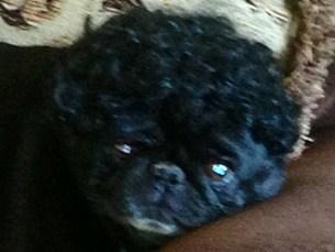 oprah wig 1
