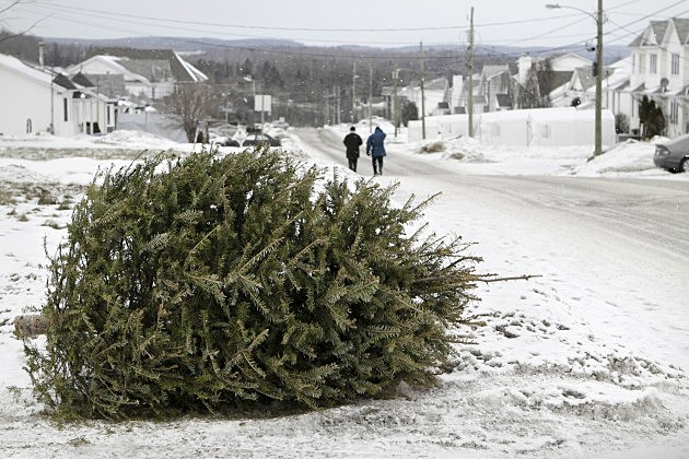 Christmas tree to garbage on the border of road