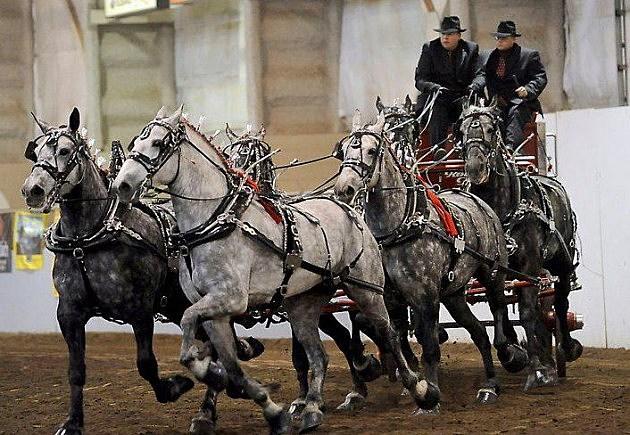 Draft Horses at the Ranch