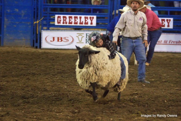 Mutton Buster Greeley Stampede