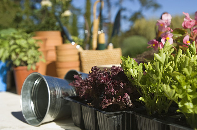 Flowers and planting supplies in garden