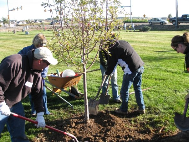 Fossil Creek Nursery team planting trees after Windsor tornado