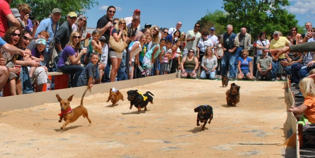 Running of the Wieners 2013