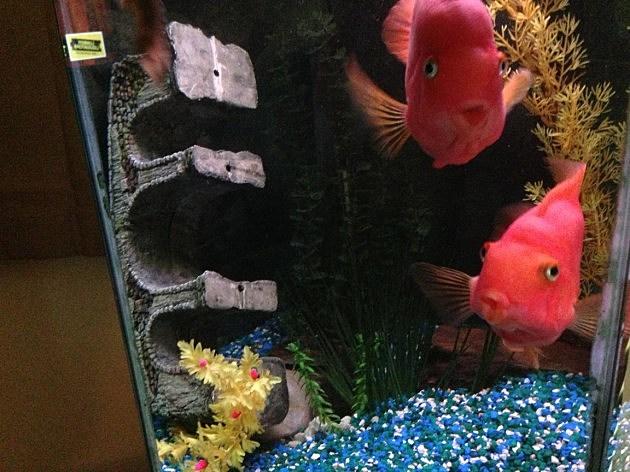 aquarium close up