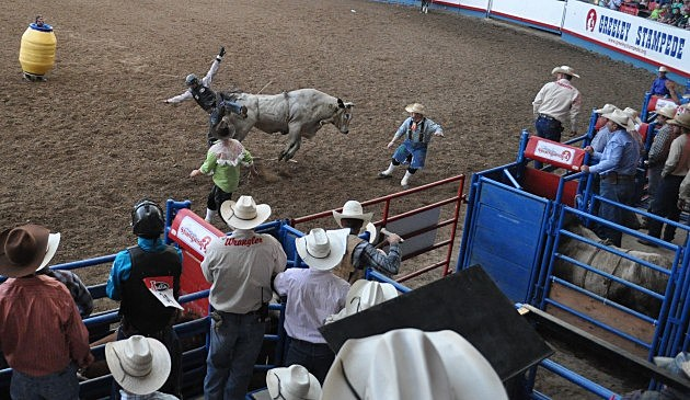 Cowboy gets bucked off at PRCA Xtreme Bulls at the 2014 Greeley Stampede