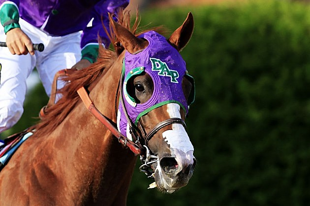California Chrome Cleared To Wear Nasal Strip In Belmont Stakes