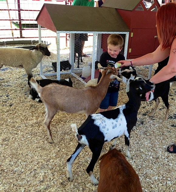 Stampede Zander and the goats