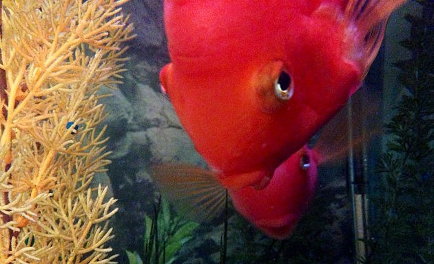fish looking evil