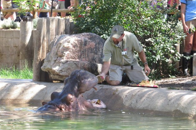 Denver Zoo Hippo Bertie just celebrated 58th Birthday
