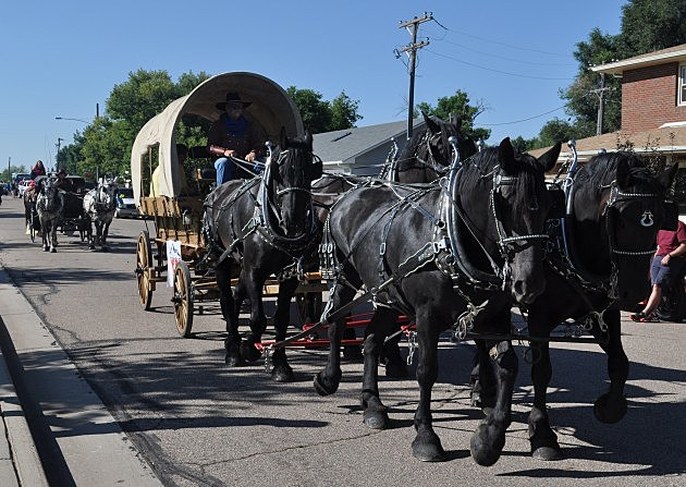 Kiowa Creek Black Percherons pull Brian & Todd in Windsor Harvest Festival Parade