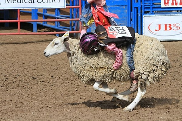 Greeley Stampede Kids Rodeo Applications Now Available
