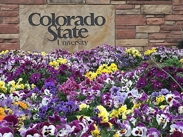 CSU Sign and Flowers