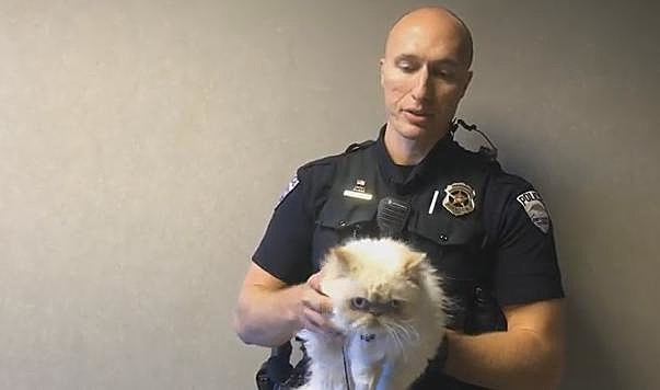 Fort Collins first patrol cat, Officer Buttersworth
