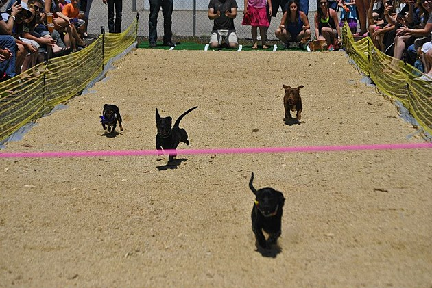 Annual Running of the Wieners