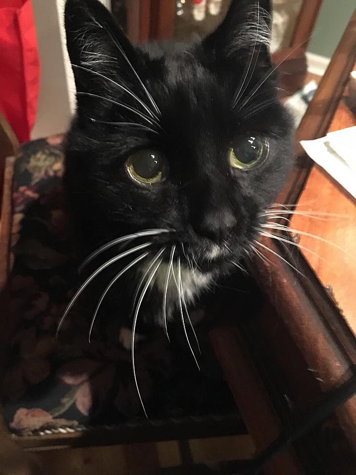 Our Cat Morgan