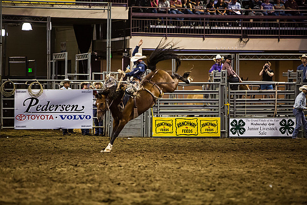 Bucking Bronc at Larimer County Fair & Rodeo