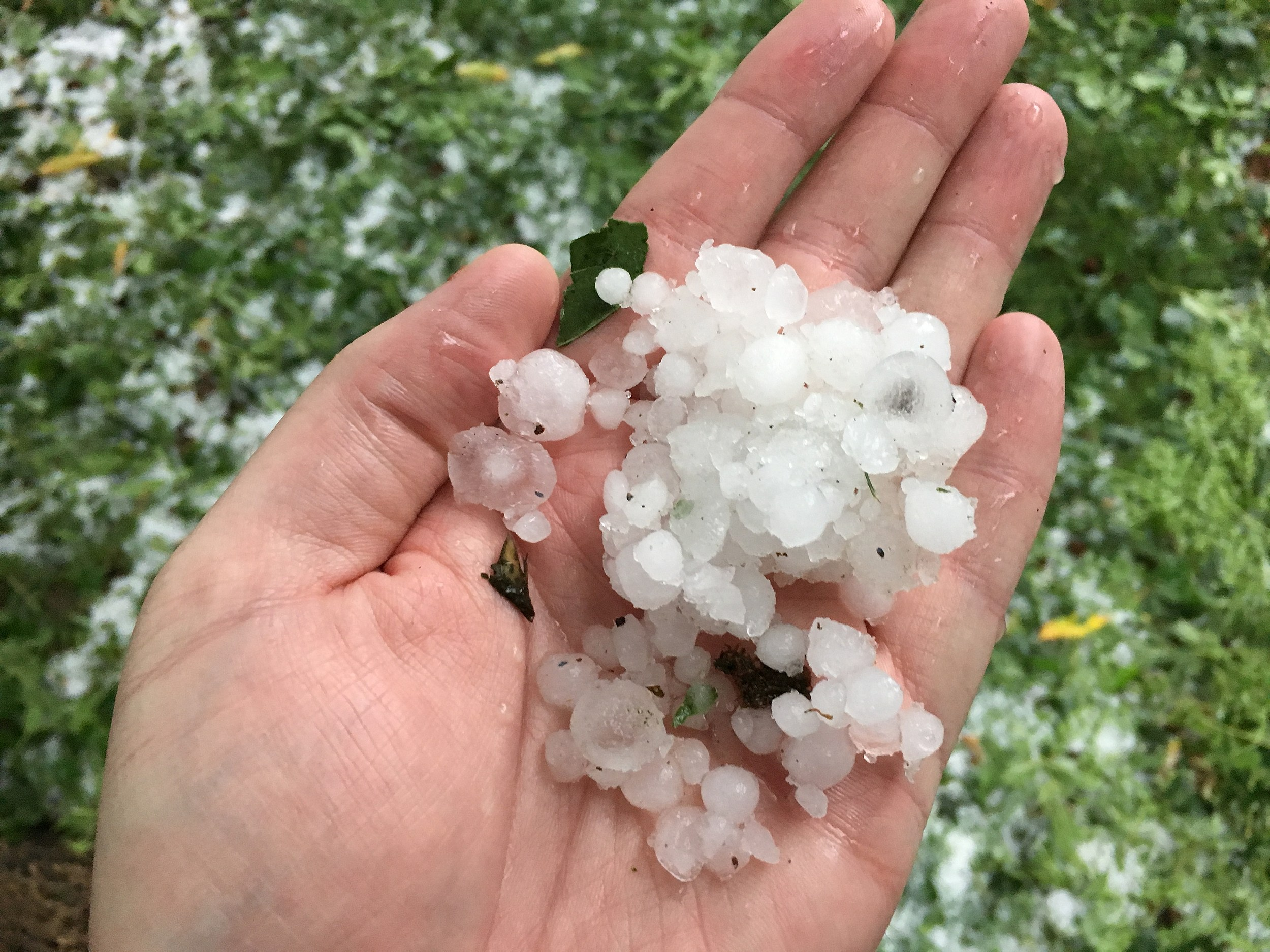 The hail that fell during Thursday's storm in Fort Collins